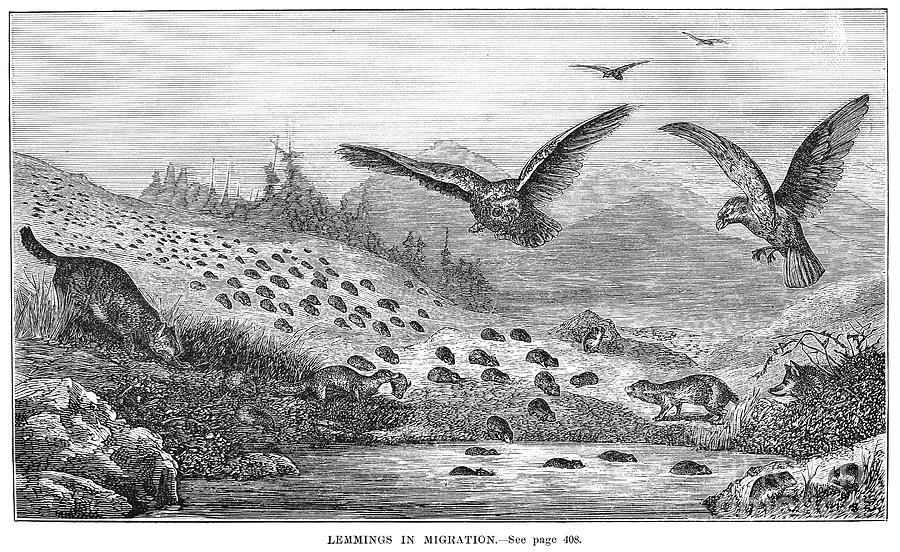 "Granger, ""Lemmings in Migration"""