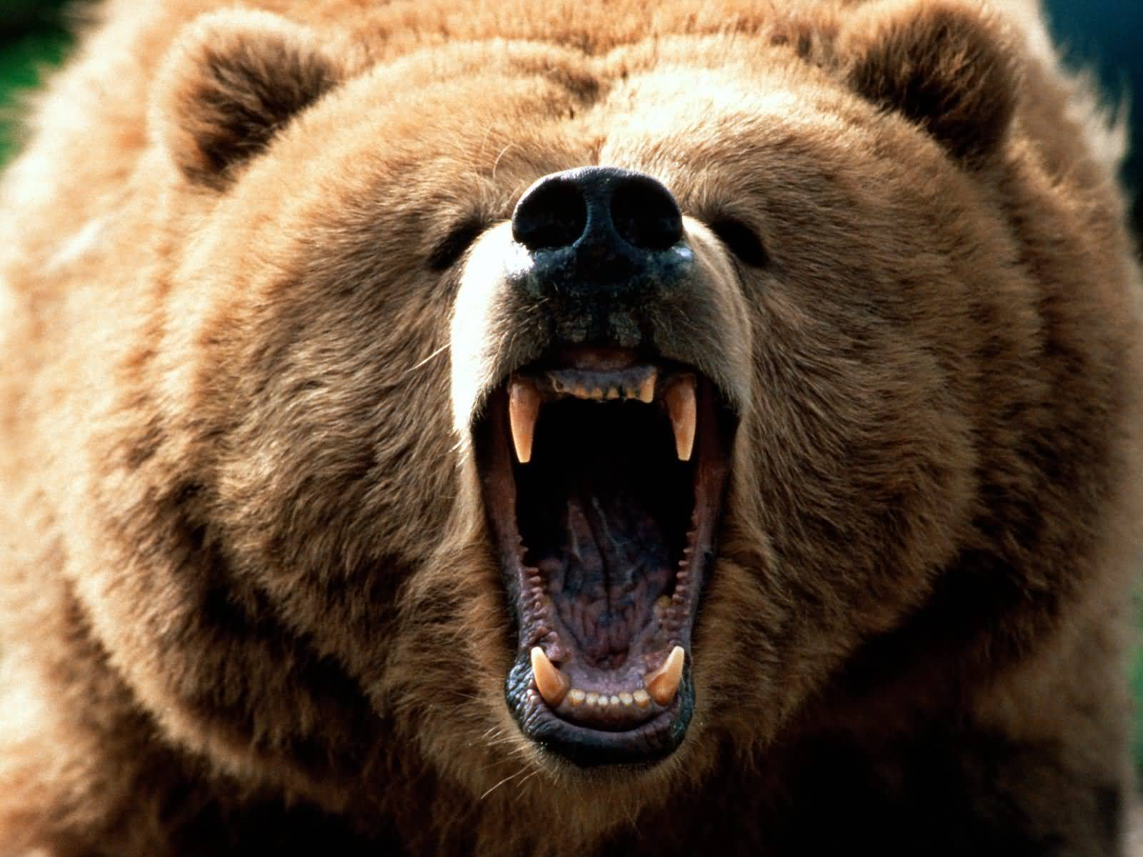 http://www.betterlivingthroughbeowulf.com/wp-content/uploads/2010/07/grizzly.jpg